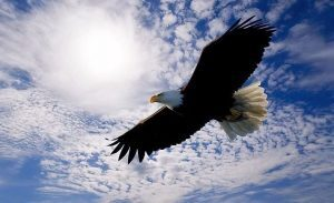 Simbologia  Aquila