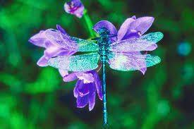 Simbologia  e significato della libellula