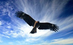 Simbologia  Falco