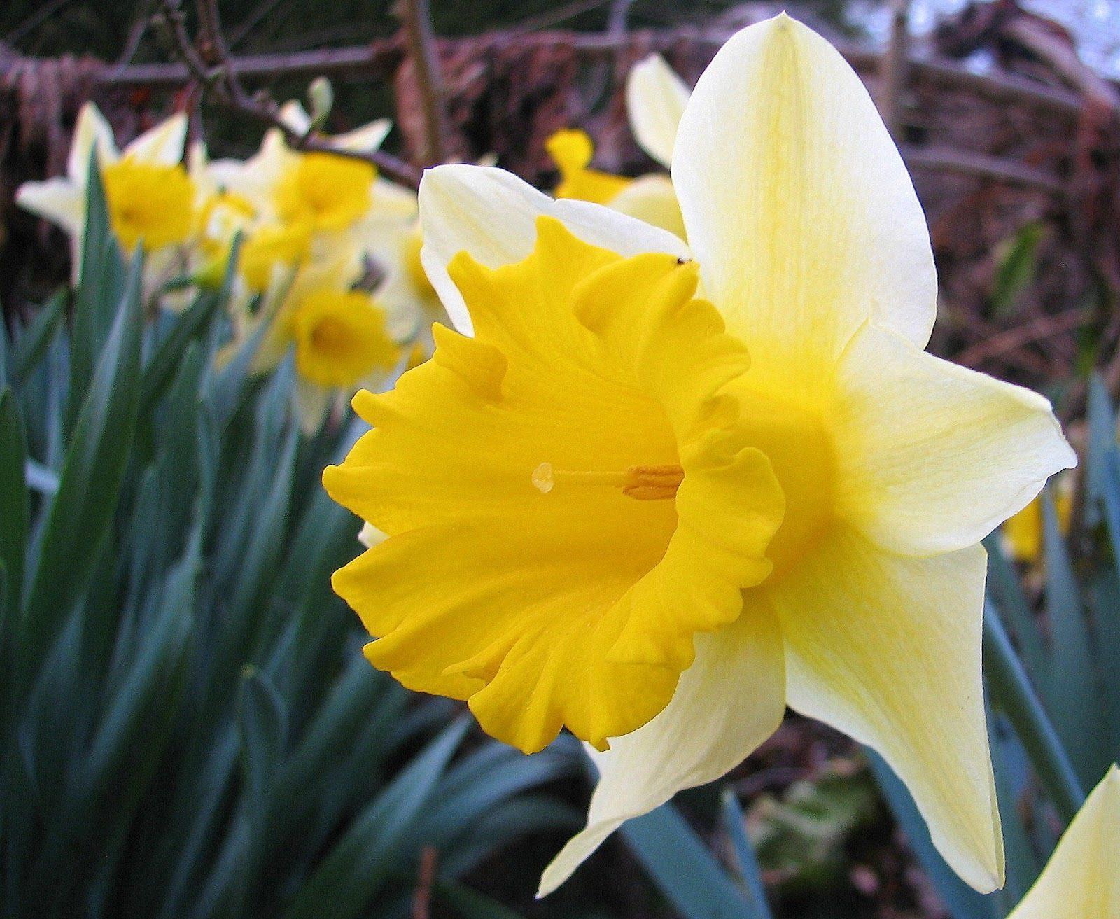 Narciso-Narcissus.jpg (1600×1313)