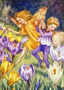 The-Crocus-Fairy