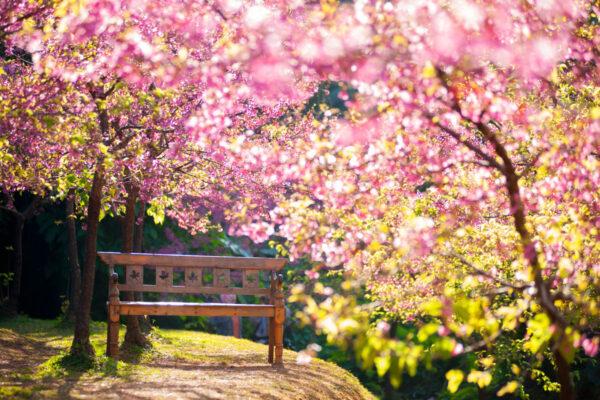 Significato dell'Equinozio di Primavera