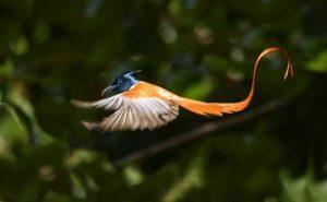 significato uccello del paradiso