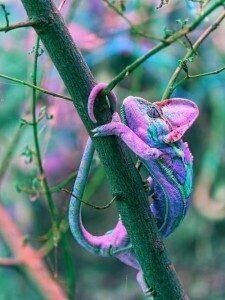 significato camaleonte