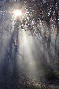 La nebbia nella simbologia