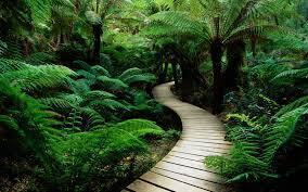 significato colore verde