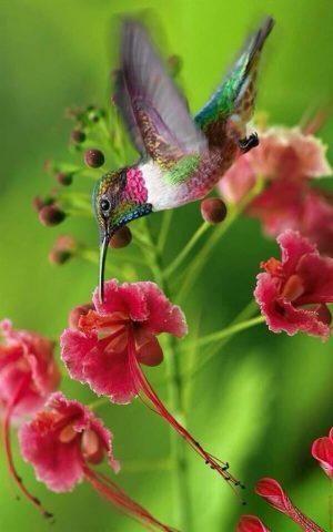 totem colibrì