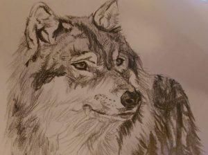 simbolo lupo