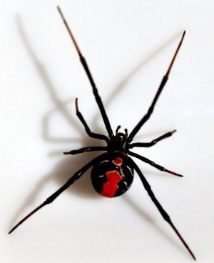 Simbologia del Ragno
