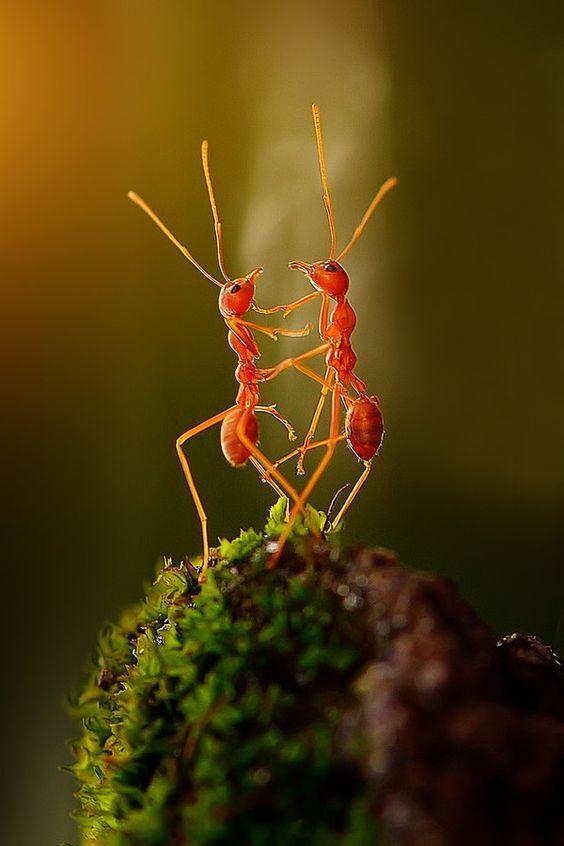 Invasione formiche significato