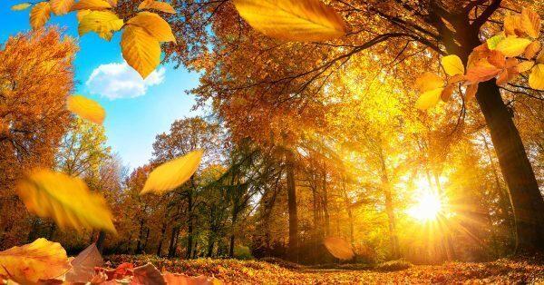 Gli antibiotici naturali per l'autunno