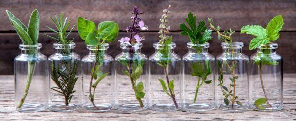 Marzo: le erbe e i rimedi del mese