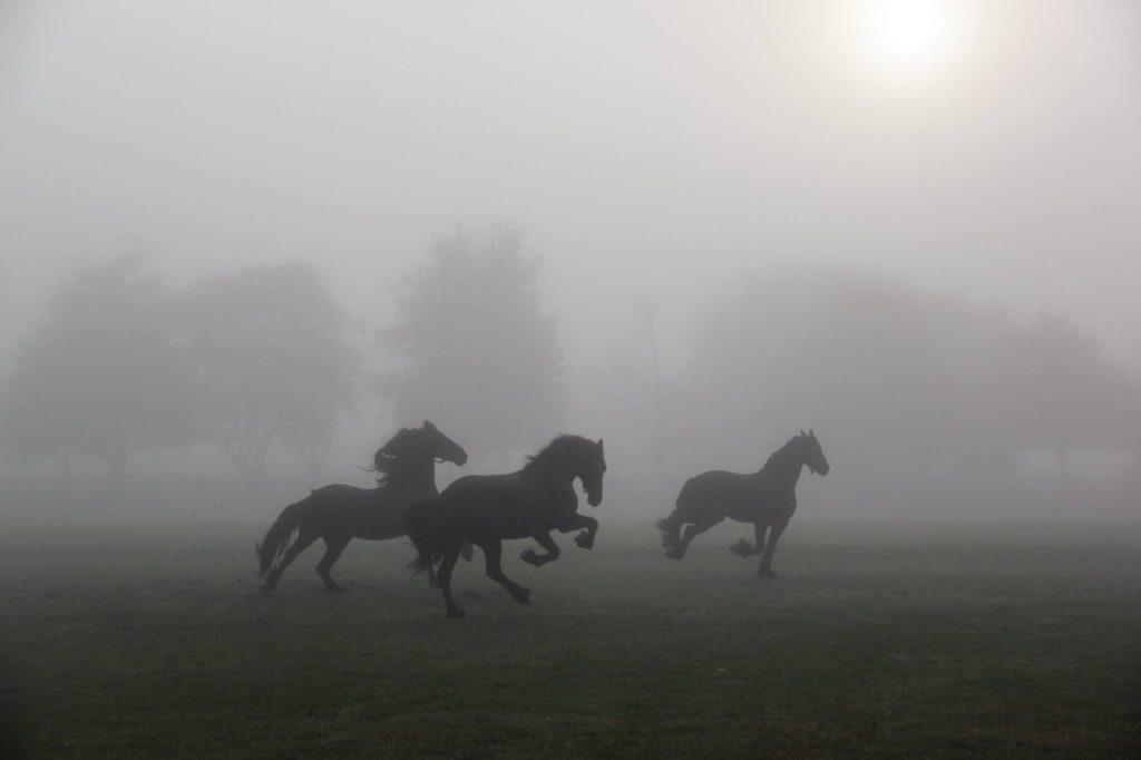 Il cavallo: simbolo, significato, leggende, miti, spirito
