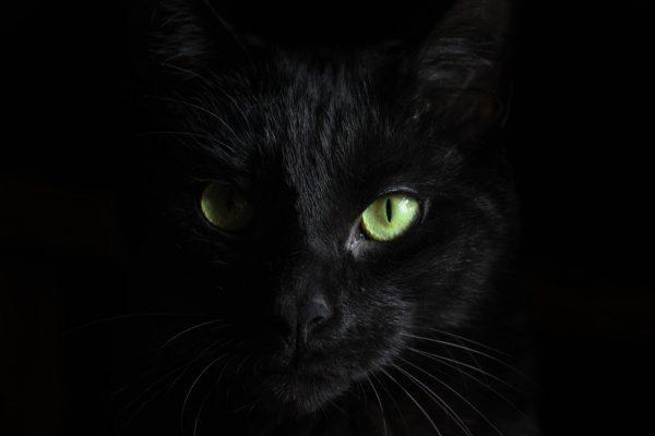 Quello che non sai sui gatti: baffi e dintorni!