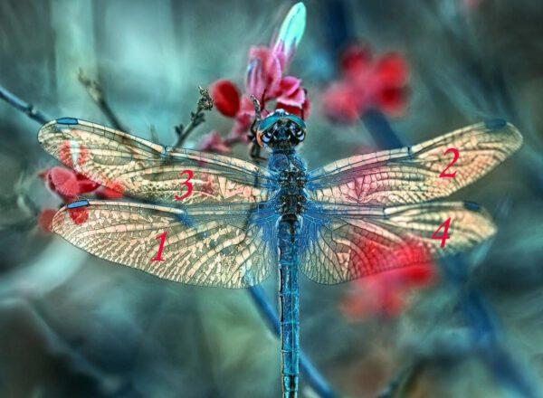 Gioco: Sulle ali di una libellula