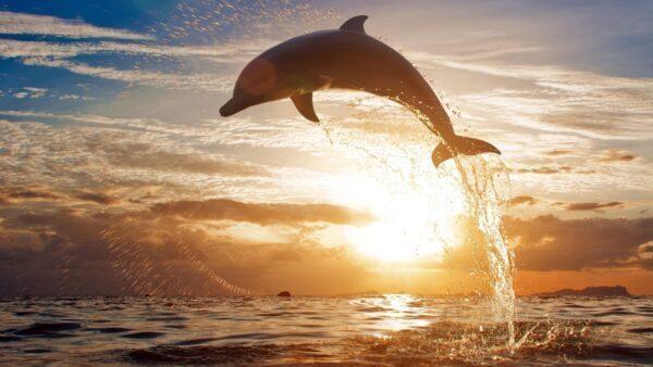 Simbolo, significato, totem del delfino
