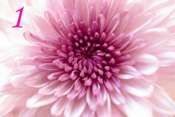 Gioco: Un messaggio dai fiori