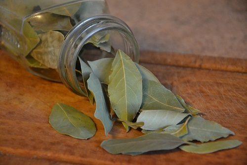Il rito delle cinque foglie di alloro per purificare la casa