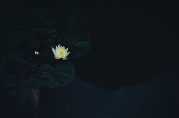 Luna nuova 20 luglio in Pushya: l'importanza di andare oltre se stessi
