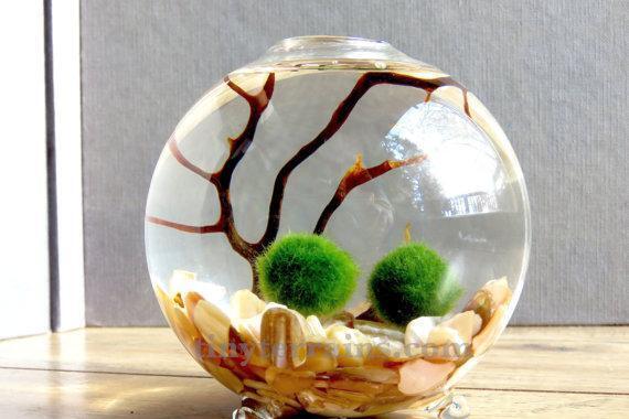 Il marimo: la leggenda dell'alga giapponese simbolo di amore eterno