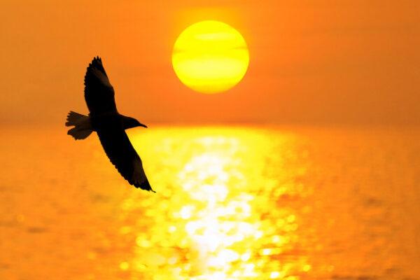 Significato simbolico del gabbiano: custode della luce e delle anime dei marinai