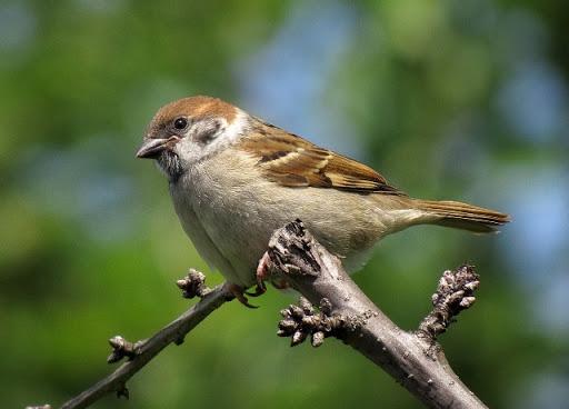 Significato simbolico del passero: l'amore nella semplicità