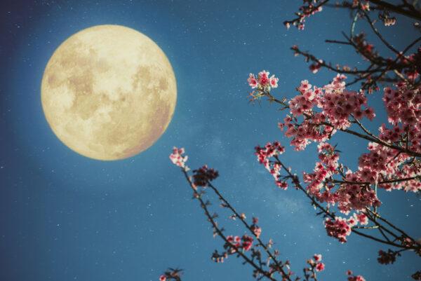 Luna piena in Hasta 28 marzo: fiorisci, la vita è nelle tue mani
